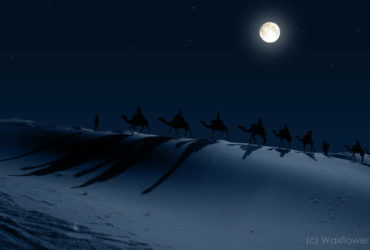 camels_in_the_desert_night_by_waxflower-other