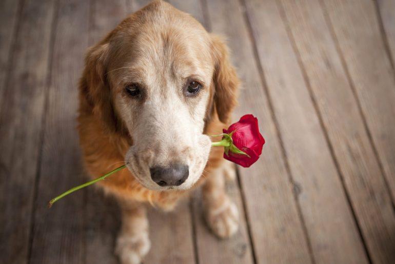 I Love You Like A Dog