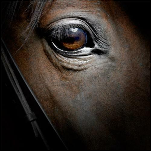 horse-1-5