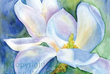 magnolia susan windsor